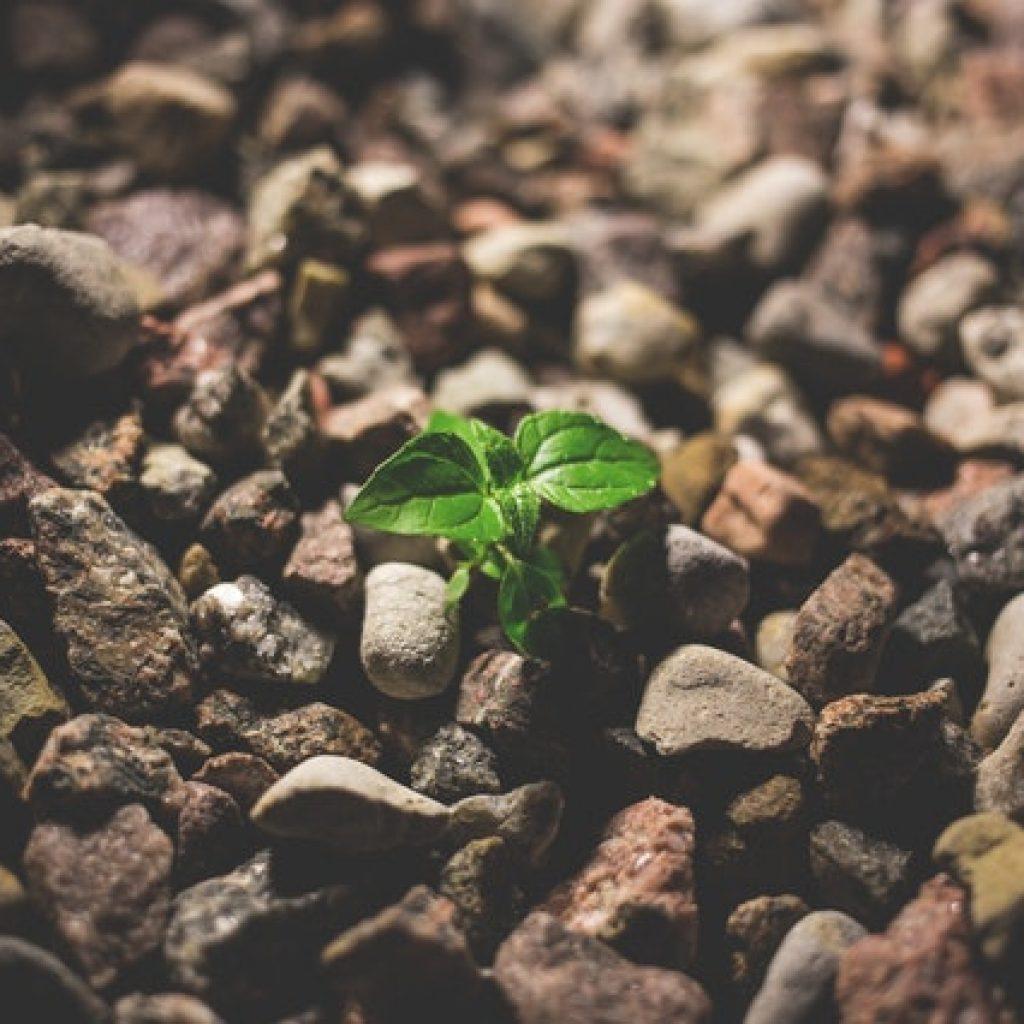 resiliencia planta pasado