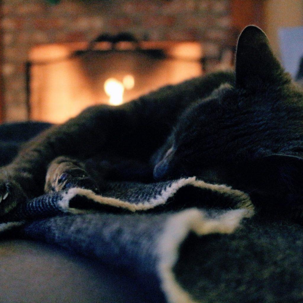 hygge felicidad gato manta