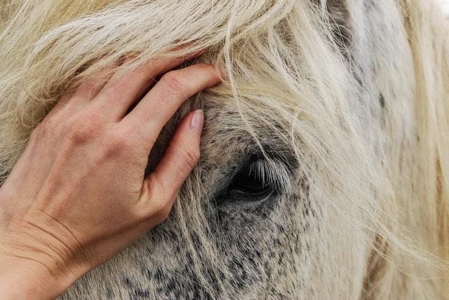 caballo-mano-naturaleza-cariño