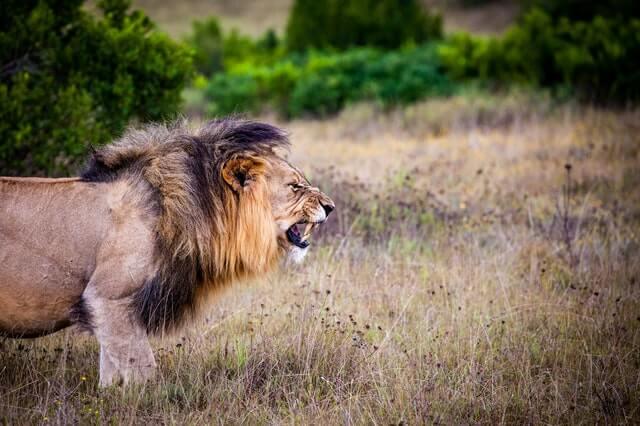 leon-pelea-critica