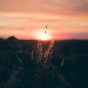 campo-tranquilidad-naturaleza